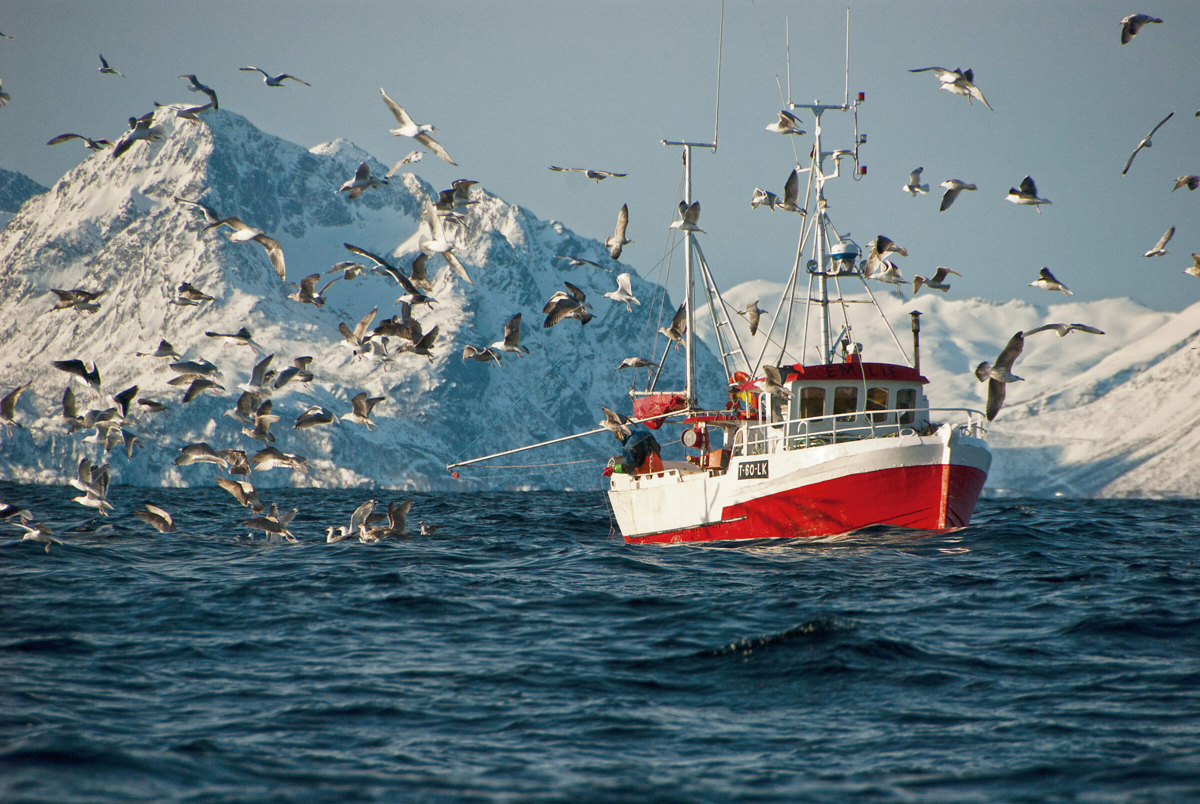 Red fishing boat in the Northern Norway with birds, sea and mountains surrounding it